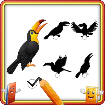 Shadow matching of toucan cartoon