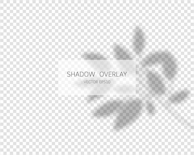 그림자 오버레이 효과. 투명 한 배경에 고립 된 자연 그림자입니다.
