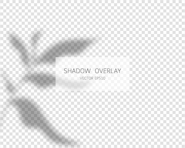 Shadow overlay effect. natural shadows  on transparent background.  illustration.