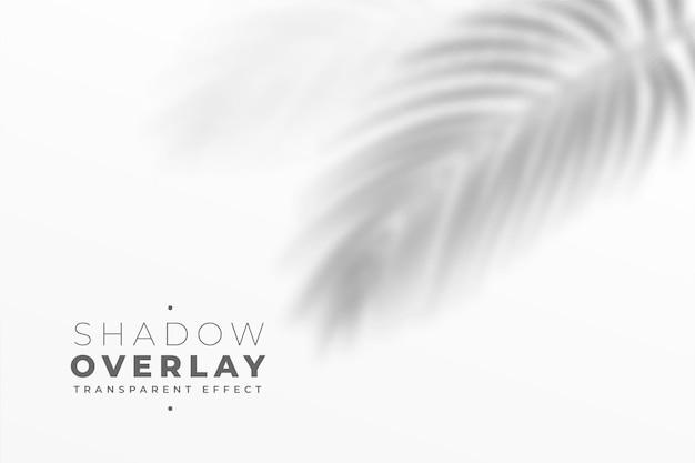 白い壁の葉の影のオーバーレイ効果