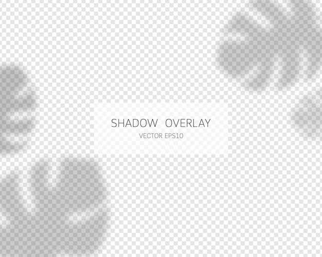 Shadow overlay effect. tropical leaves shadows. soft shadow and light overlay effect.