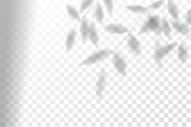 影、オーバーレイエフェクトのモックアップ、ウィンドウフレーム、植物の葉