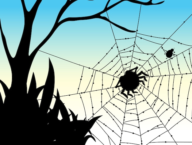 Shadow of spider web nature background