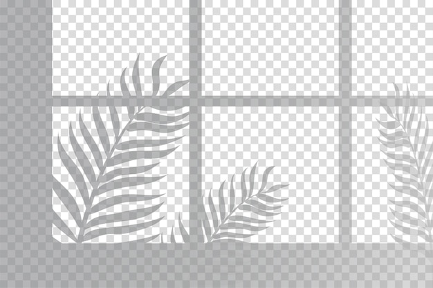 Shadows of fern leaves overlay effect