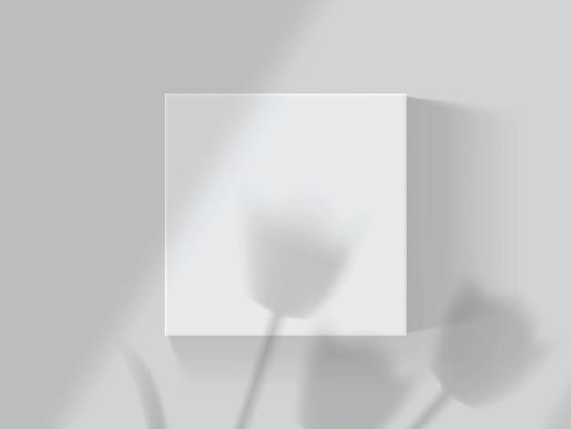 白い箱の上のチューリップと窓からの影