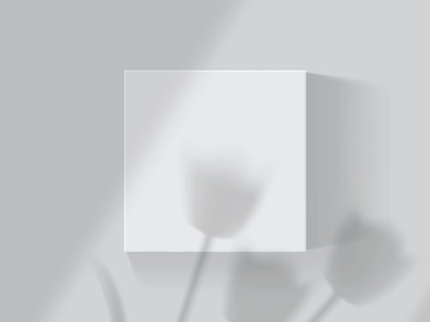 Shadows from tulips and windows on a white box