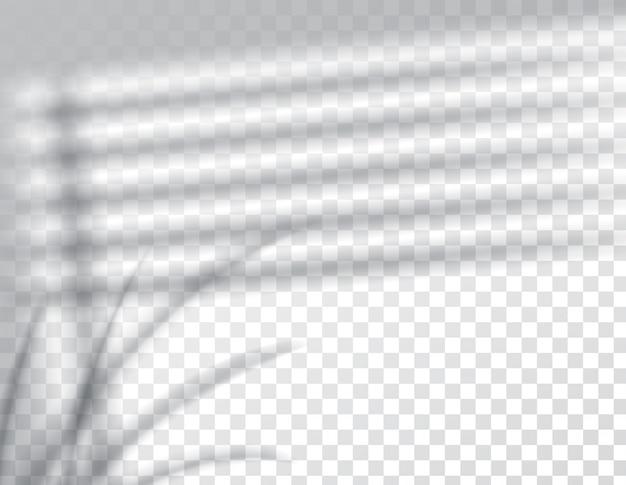 그림자 오버레이 효과, 창 블라인드 프레임 및 식물의 잎, 자연 채광, 그림.