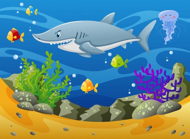 Акула и другие морские животные под водой