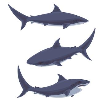 鮫。水中のかわいい海洋生物