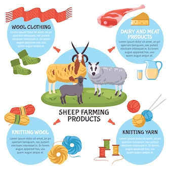 Sheep breeding infographics