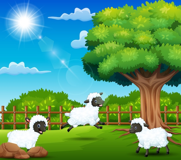 The sheep farm are enjoying nature by the cage