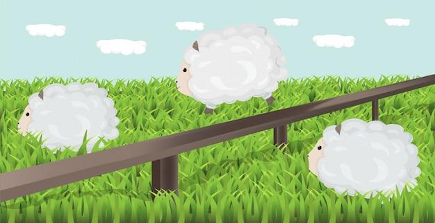Овцы пасут траву