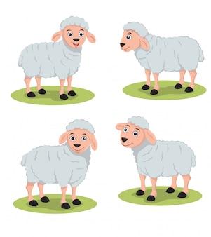 Овцы иллюстрации