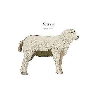羊のスケッチスタイル