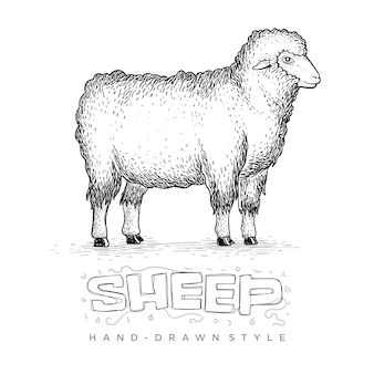 Sheep standing tall side view, illustration of a hand drawn animal
