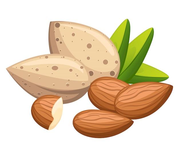 Очищенный и без скорлупы миндального ореха с листьями иллюстрации на белом фоне страницы веб-сайта и мобильного приложения