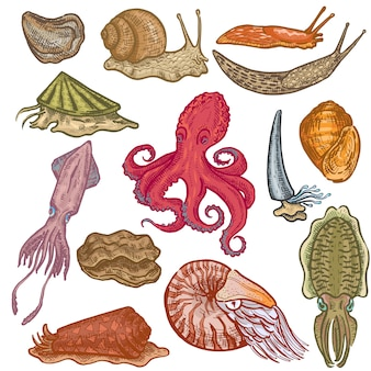 Shellfish marine animal octopus molluscs animalistic character octopi with tentacle oyster snail in sea illustration set of seafood cuttlefish devilfish isolated on white background