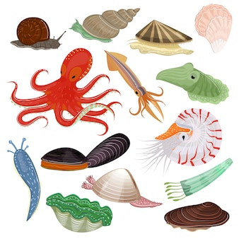 Shellfish marine animal octopus molluscs tentacle and animalistic character octopi oyster snail in sea illustration set of seafood cuttlefish and devilfish isolated on white background