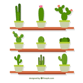 Shelves with decorative cactus in flat design