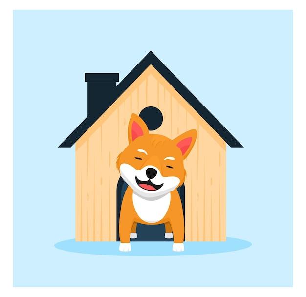 Shiba inu dog at home