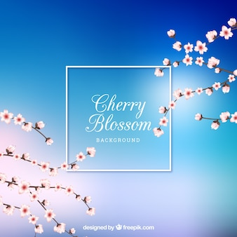 Shiny blue cherry blossom background