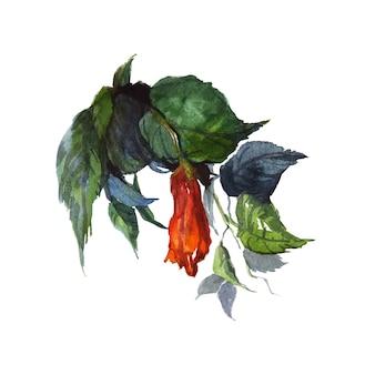 잎 그림으로 shoeblackplant 수채화 꽃