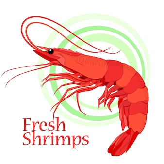 Shrimp artwork. color and line art drawing. element for design layouts.