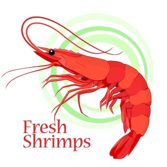 Shrimp artwork. color and line art drawing. element for design layouts.