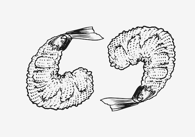 寿司のエビ。日本のシーフード。メニューの手描きの刻まれたスケッチ。モノクロームスタイル。