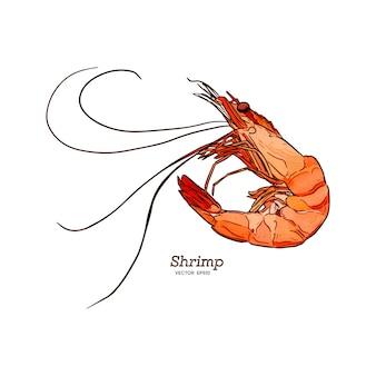 Shrimp sea caridea animal engraving vector illustration.