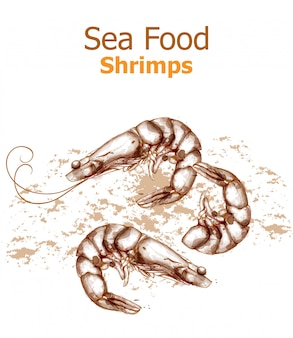 Shrimps sea food line art