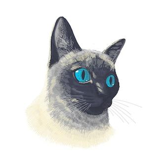 Сиамская кошка животное лицо. векторный портрет головы кошки. эскиз тайского котенка