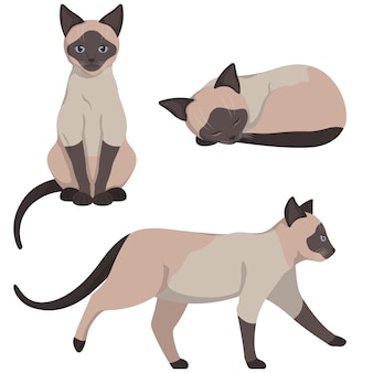 Siamese cat in different poses. beautiful pet in cartoon style.