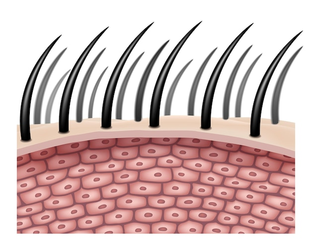 The side view enlarges the hair cells or follicles for comparison in hair treatment