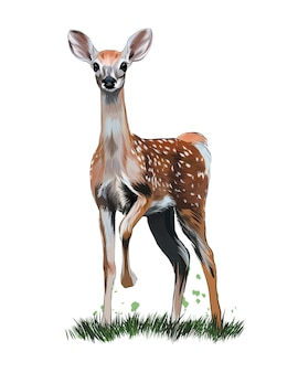 Sika deer from multicolored paints colored drawing realistic