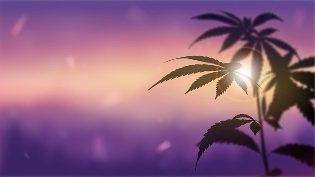 Silhouette of cannabis against sunset.