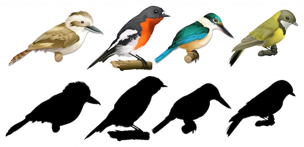 Silhouette, color and outline version of birds
