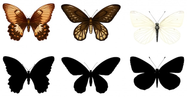 Silhouette, color and outline version of butterflies