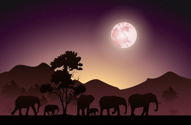 Silhouette of the elephants that walk at night