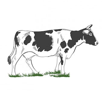 Silhouette, figure of a cow with horns standing in the green grass, illustration.