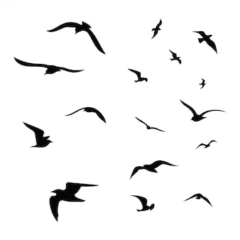 Bird Images Free Vectors Stock Photos Psd