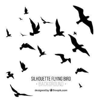 Silhouette flying bird background