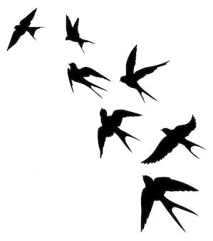 ツバメの群れのシルエット。飛んでいる鳥の黒い輪郭。空飛ぶツバメ。