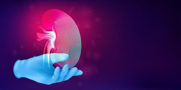 현실적인 고무 장갑에 인간의 신장의 실루엣. 추상적 인 배경에 인간 장기의 윤곽을 가진 3d 의료 개념. 네온 라인 아트 스타일의 벡터 일러스트 레이 션
