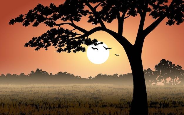 일몰에 나무의 실루엣