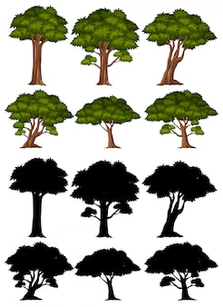 Silhouette pictures of big tree on white background