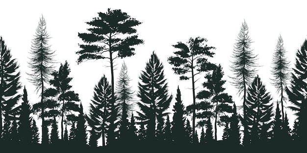 Silhouette of pine forest with small and tall evergreen trees on white
