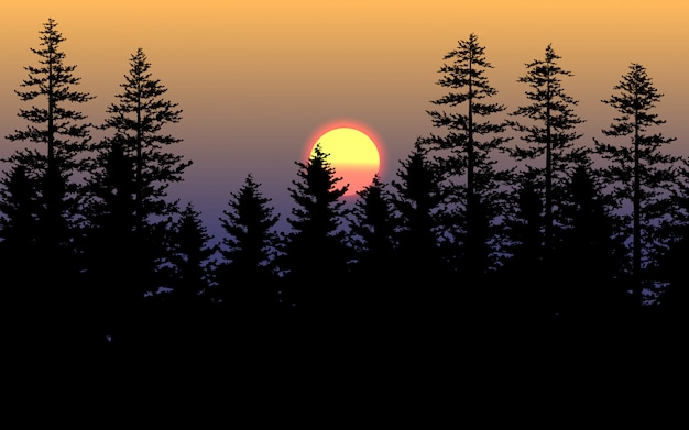 Silhouette of pine trees on sunset