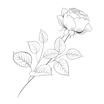 Silhouette of rose isolated over white.