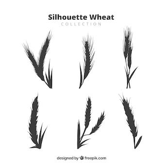 Коллекция пшеничной пшеницы